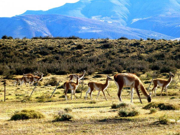 Abundant wildlife at Torres del Paine National Park