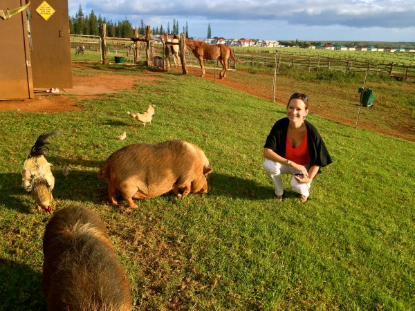 Hanging out with Lola and Henry, Koele's resident pot-bellied pigs