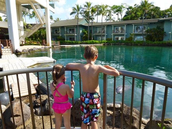 Watching the dolphin feeding at The Kahala