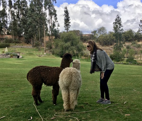 Alpacas at Belmond Rio Sagrado