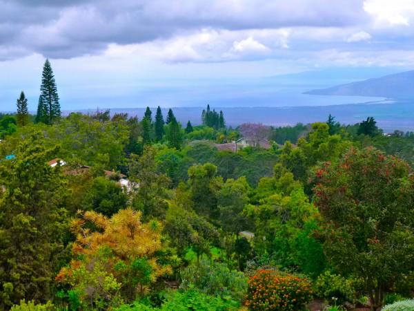 Lush Maui