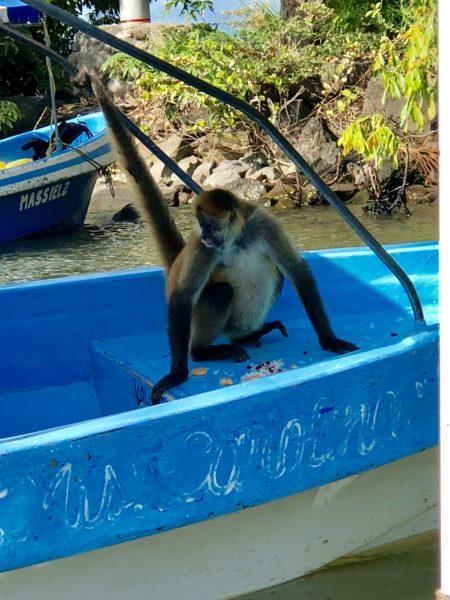 Monkey time in Nicaragua